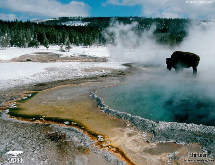 5814203_YellowstoneWallpaper (700x537, 193Kb)