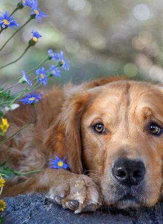 собака (318x437, 25Kb)