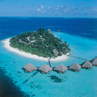 maldivy (400x399, 142Kb)
