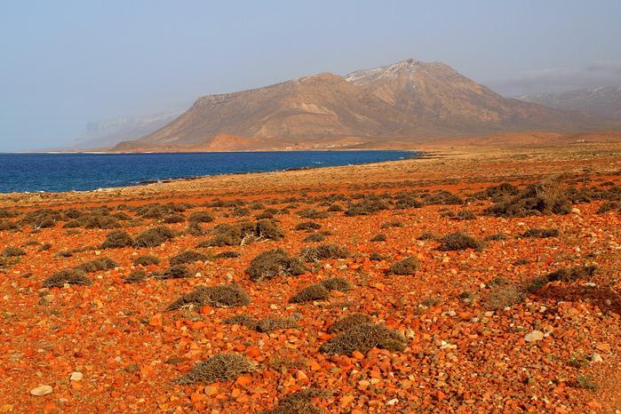 Остров Сокотра4