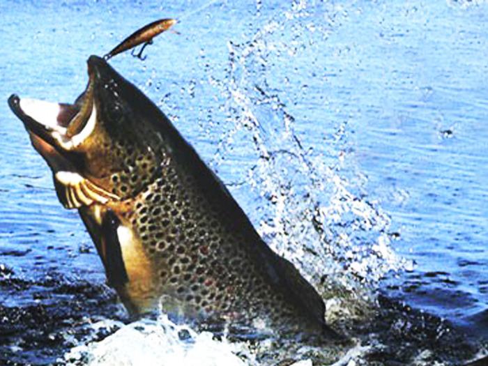 рыба играет но не клюет