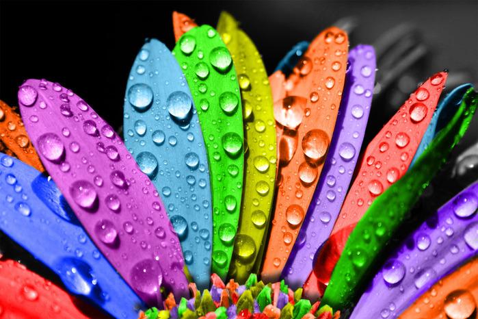 fiori-dai-mille-colori (700x466, 158Kb)