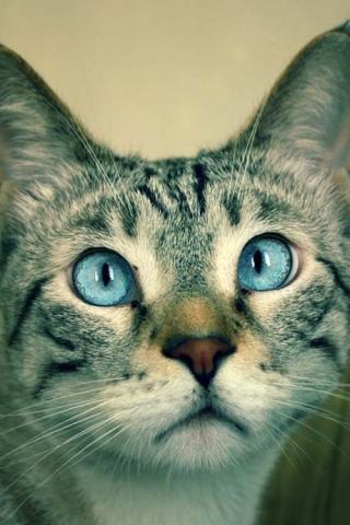 Cat (320x480, 116Kb)