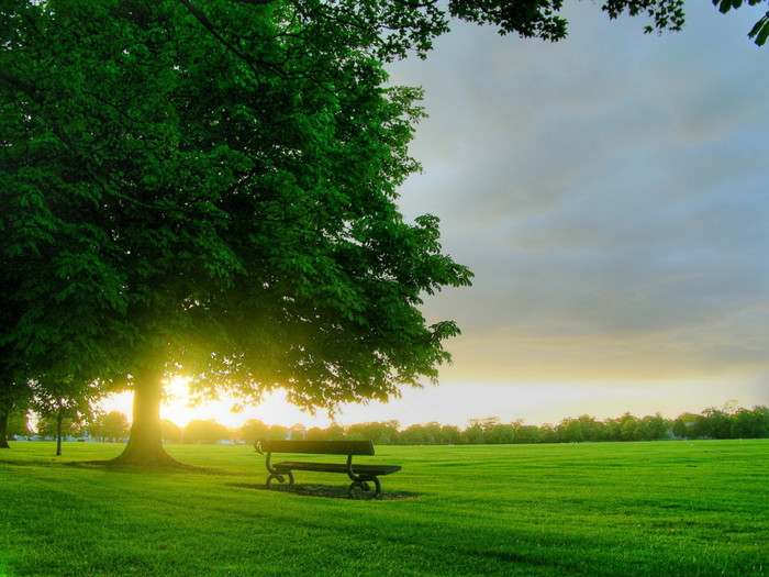 Nature_Other_Morning_in_park_005301_ (700x525, 120Kb)