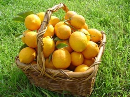 lemons2 (447x336, 37Kb)