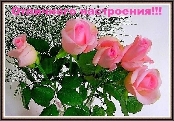 ОТЛИЧ.НАСТРОЕНИЯ! розы (600x418, 108Kb)