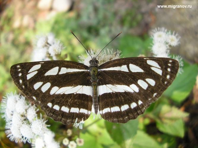 Черно белые бабочки анимация открытка