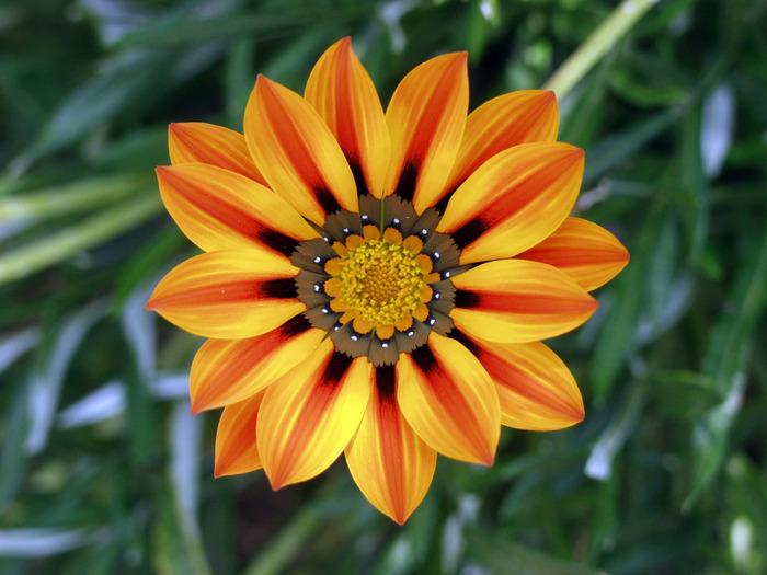 Flower_jtca001 (700x525, 122Kb)