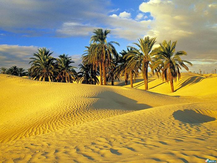 фото туниса 1 (700x525, 143Kb)