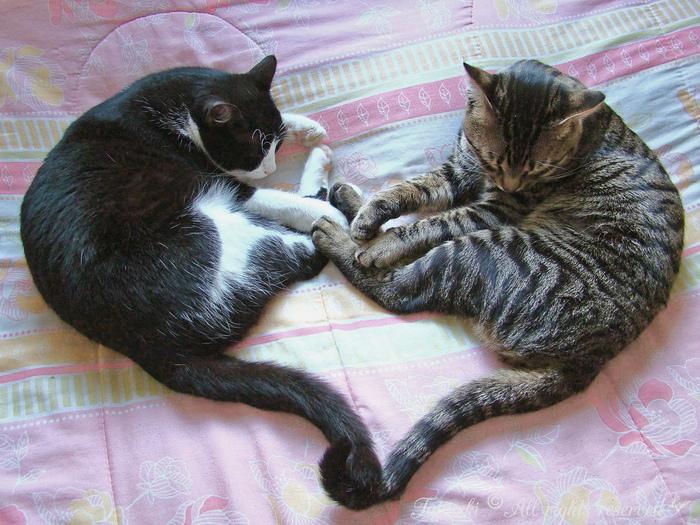 два-кота (700x525, 262Kb)