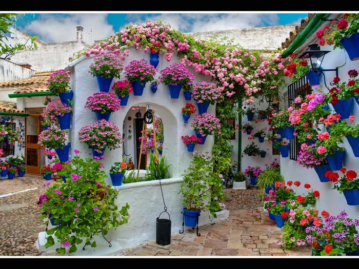 дом. цветы фото