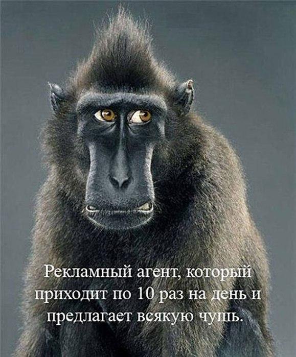 Pin фото на аву вконтакте прикольные on ...: pinstake.com/фото-на-авÑ...