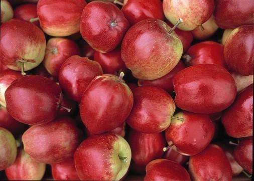 яблоки (506x361, 59Kb)