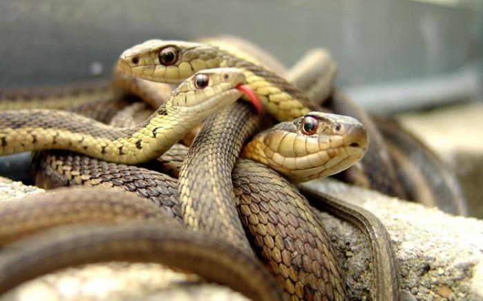 змеи/4348076_8zmei (700x437, 77Kb)