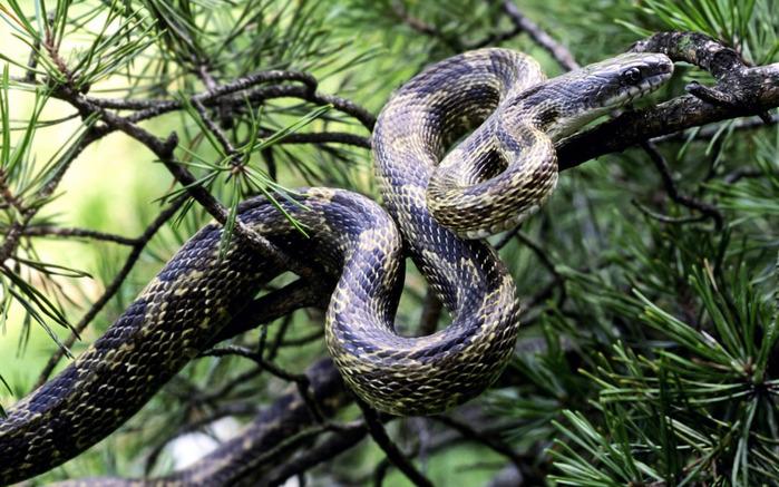 змея на дереве/4348076_1_zmeya (700x437, 153Kb)