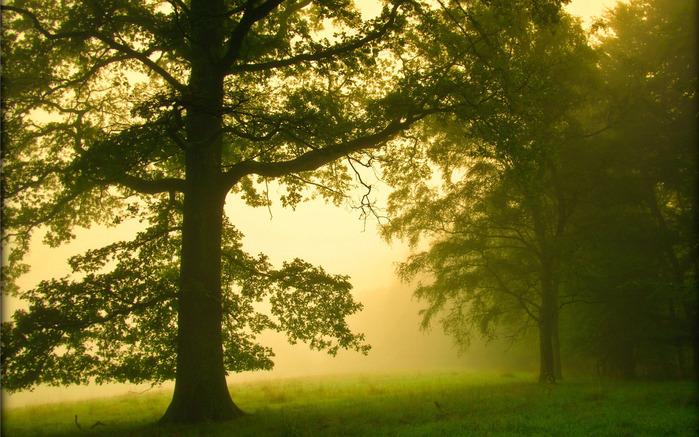 утренний туман/4348076_145ytro (700x437, 170Kb)