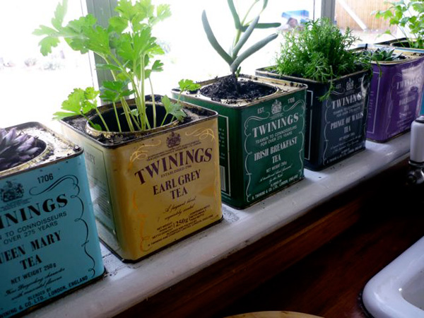 Indoor Edible Garden Creative Ways to Grow Herbs Fruits