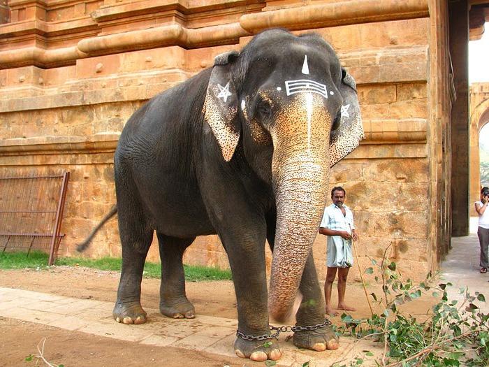 Танджавур - Брихандишвара Мандир (Brihadishwara Mandir) 51728