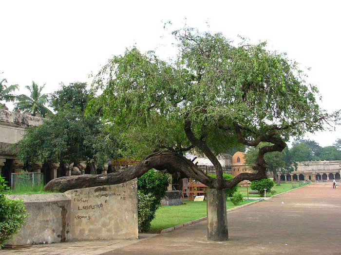 Танджавур - Брихандишвара Мандир (Brihadishwara Mandir) 79501