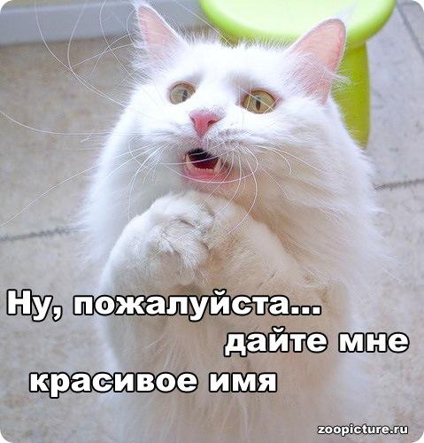 73849689_catname (479x500, 71Kb)