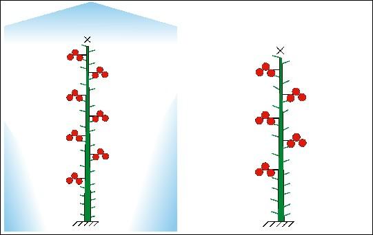Формирование индетерминантного