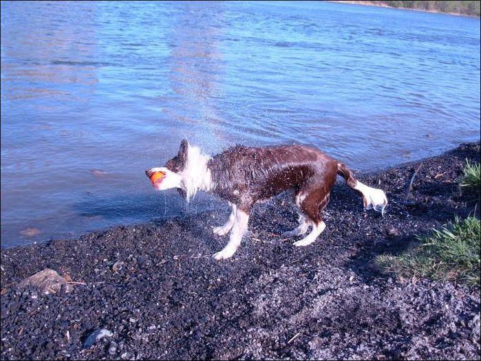 dog-shaking-03 (700x525, 108Kb)