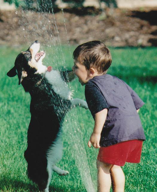 dogs-vs-sprinklers-18 (525x640, 74Kb)