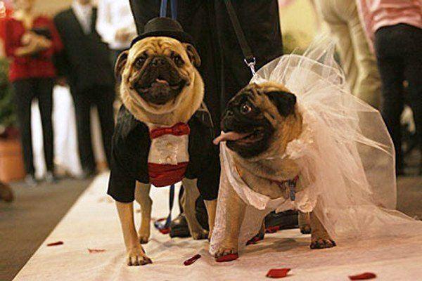 wedding_animals_13 (600x400, 46Kb)