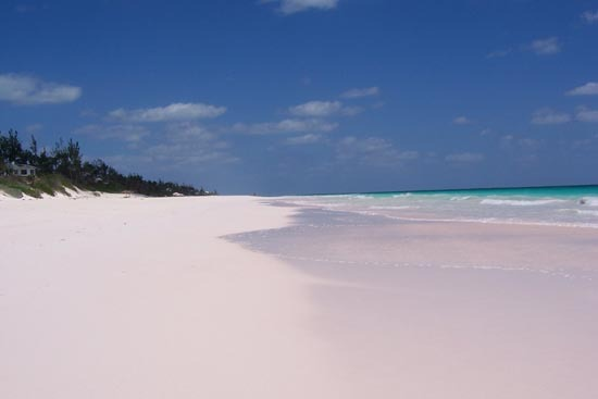 Pink Sands Beach3 (550x367, 14Kb)