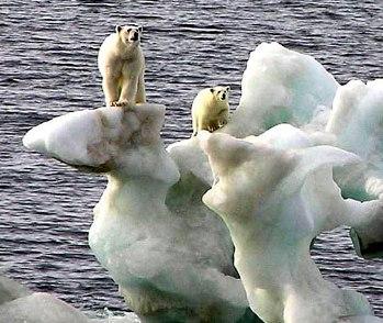 медведи на айсберге1 (349x294, 37Kb)