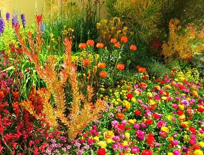 Коллекция из четырех цветников ImageHandler.ashx (400x305, 110Kb) .