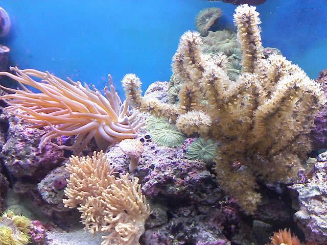 Коралл камень фото