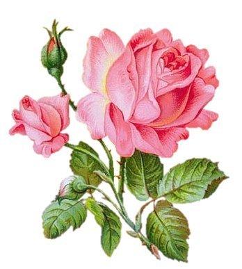 75161598_rose4 (348x387, 28Kb)