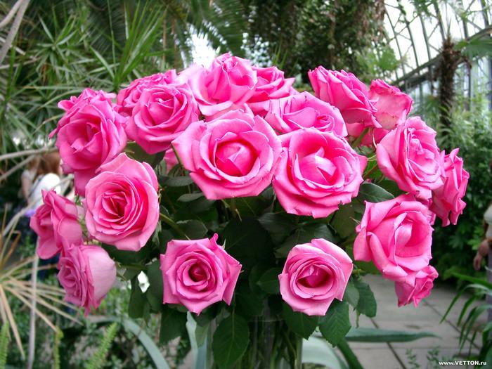 букет из роз (700x525, 193Kb)