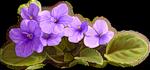 1308567530_0_50bea_8cb0e88_Sjpg (150x70, 22Kb)