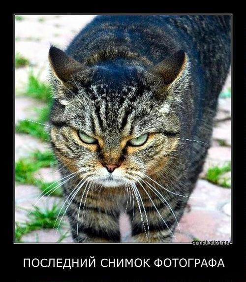 Последний снимок фотографа 4083067fotocat