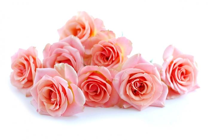 http://img0.liveinternet.ru/images/attach/c/3/75/443/75443850_4394340_bsp_roses.jpg