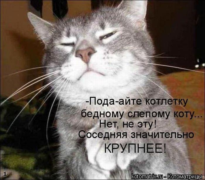 kotomatrix_12 (700x616, 71Kb)