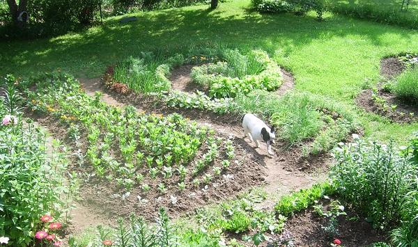 Декоративный огородxфото декоративного огорода с необычными грядками