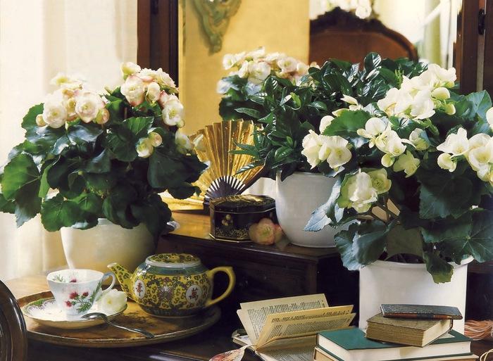 Комнатные растения фото и описание 15