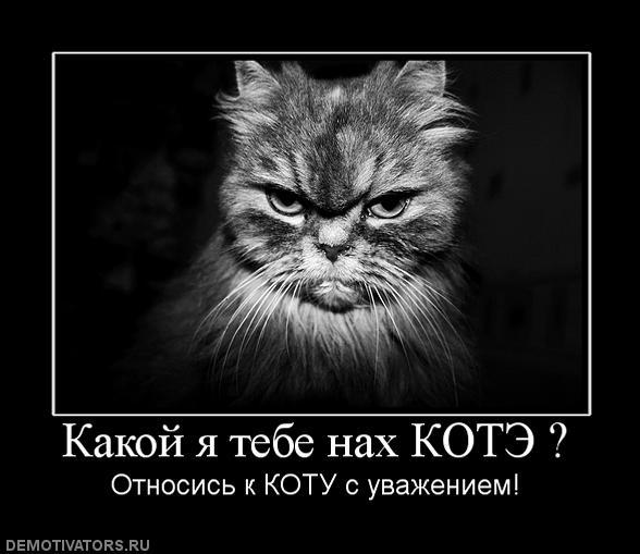 802624_kakoj-ya-tebe-nah-kote- (588x509, 39Kb)