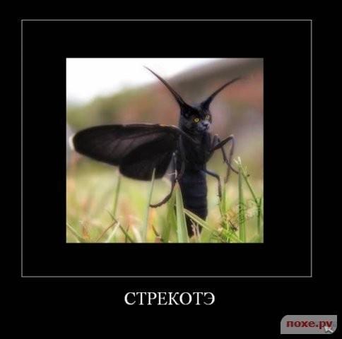 1263314462_1261999923_kotye-45 (484x480, 26Kb)