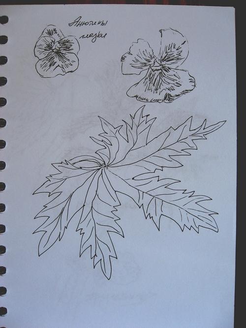 растения-3 (500x667, 265Kb)