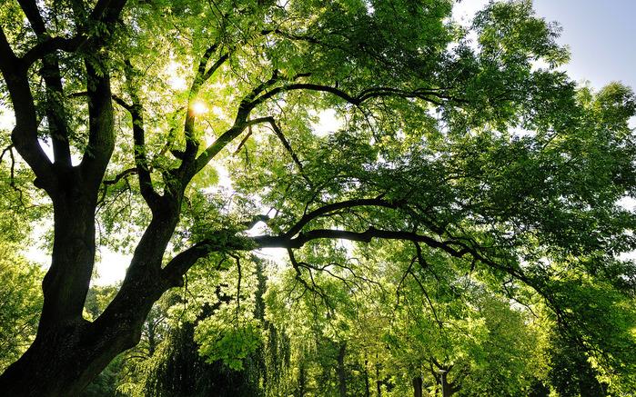 солнце и листва/4348076_1solnce (700x437, 285Kb)
