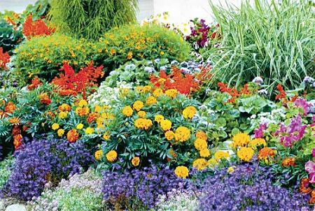 Нашла в интернете много разных и полезных советов.  Хочется на даче создать клумбу непрерывного цветения.