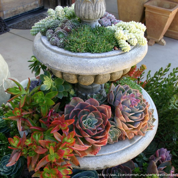 succulent-garden-in-home-and-outdoor (600x600, 302Kb)