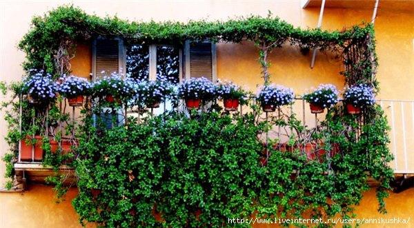 balcon-flowers10 (600x331, 204Kb)