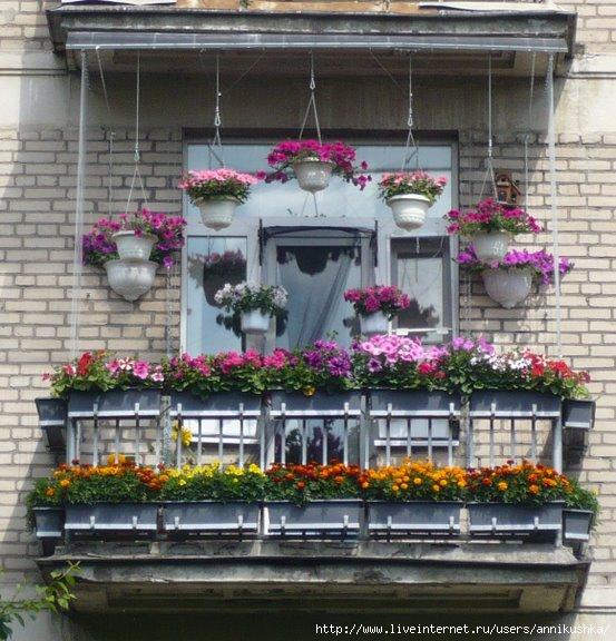 balcon-flowers7 (553x576, 200Kb)
