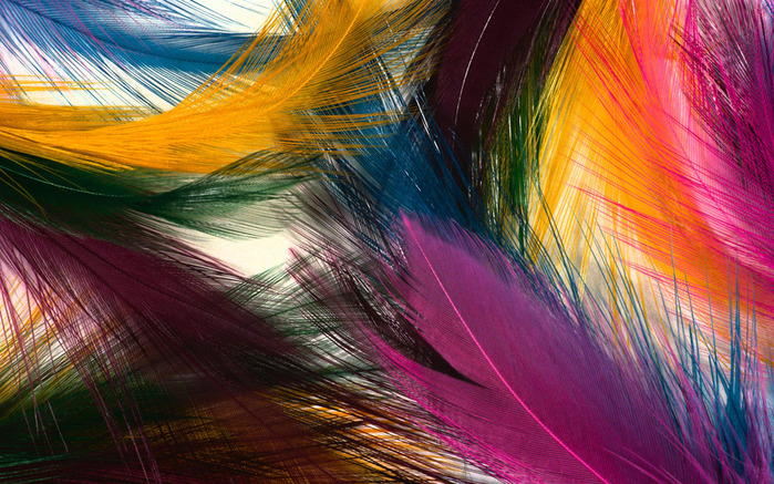 Colorful Feathers and Wing Wallpapers (700x437, 213Kb)