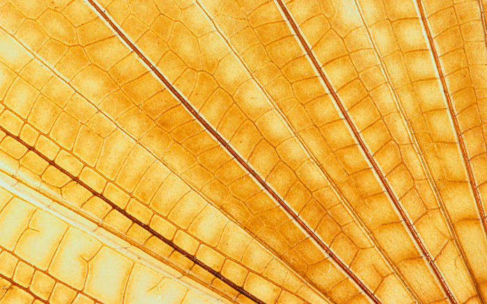 Colorful Feathers and Wing Wallpapers (14) (700x437, 198Kb)
